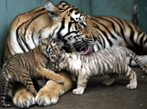 Yeah, try taking her cubs. Not happening. I'm on the Mama Tiger side of things...